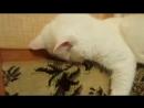 Котя спит.