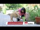 Clean Dog — инновация для мытья лап вашего питомца