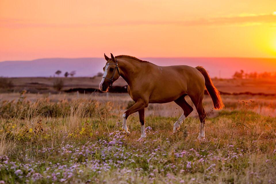 Донские лошади в картинках
