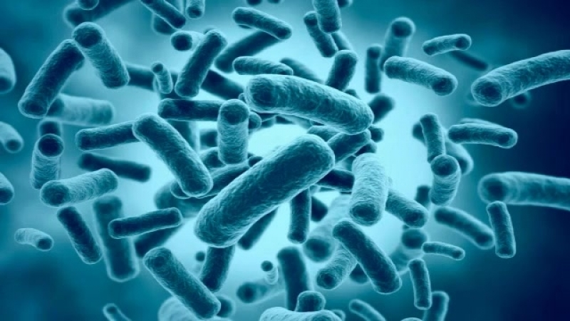 Анаэробные организмы_ жизнь без кислорода (рассказывает профессор Юдес Каланиекс