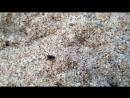 Паучек на красивом песочке
