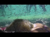 A normal Day under Sea Aram Khachaturian, Adagio from Spartacus