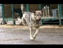 Дик. Особенный пес в ожидании любящего хозяина 🙌 пес_инвалид_дик дик_бирюлево