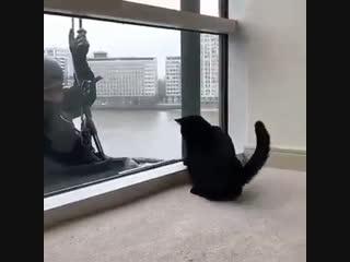 Мойщик окон играет с котом