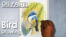 How to Draw Bird in Oil Pastel Himalayan bluetail