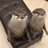 "Animals Lovers   🐻🐹 on Instagram: ""😋💕🤣 . @usacafe_mimi"""