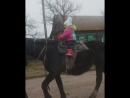 катаемся_на_лошадке_Амиго