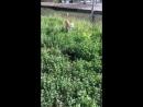 О чужих котиков