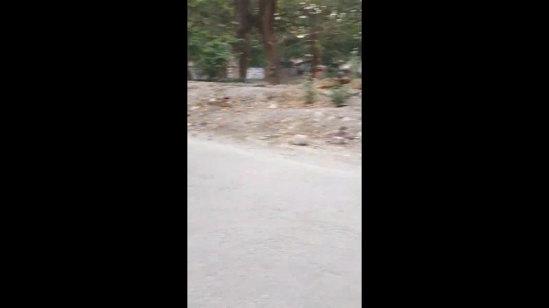 Haridwar 2017
