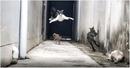 Короткометражный боевик с участием кошек запечатлел житель Таиланда. Кошка…