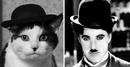 Это только в песне Жанны Агузаровой кошки не похожи на людей. На самом же деле…