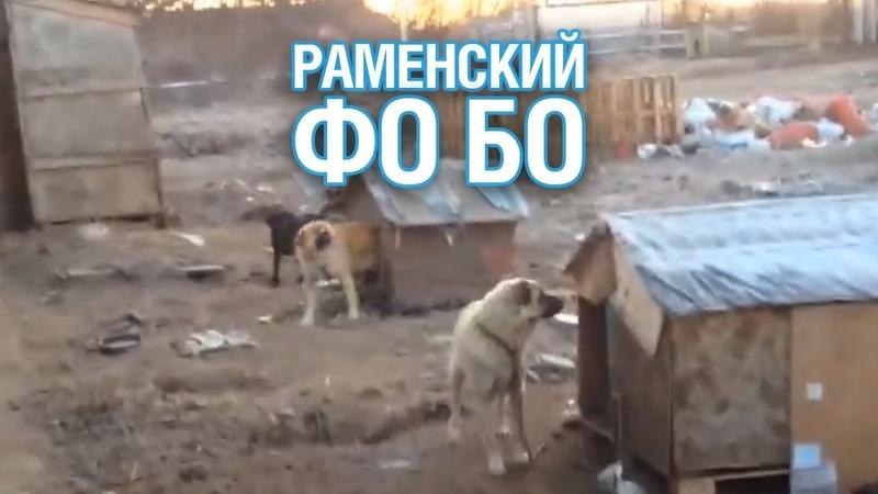 Вьетнамцы разделывали и ели собак, которых держали в плену под Раменским - Подмосковье 2018 г.