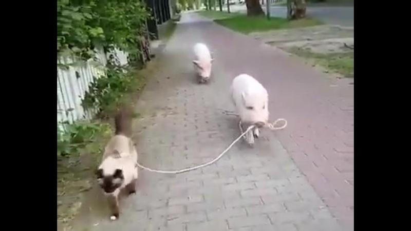 Пятачок вывел котейку на прогулку смотреть онлайн без регистрации