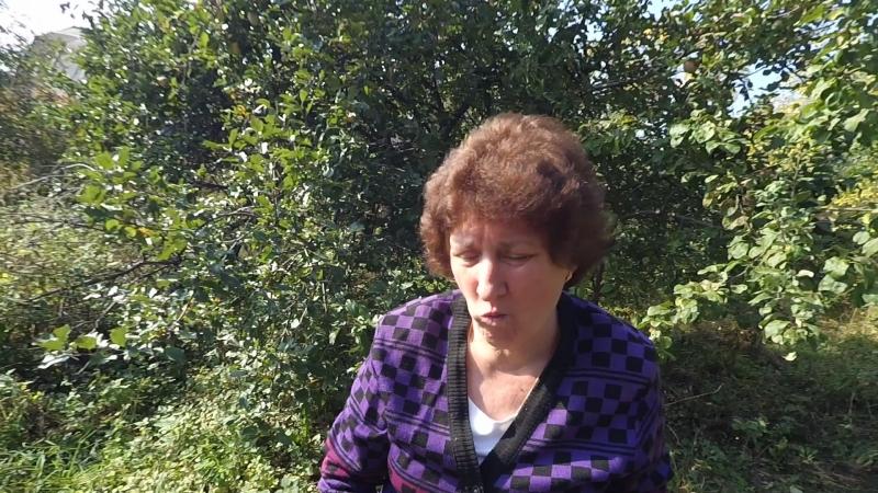 Галина и Володя в саду собирают яблоки 22.09.2018г