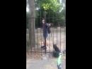 Город Орёл Чмошник избивает собаку на глазах у детей