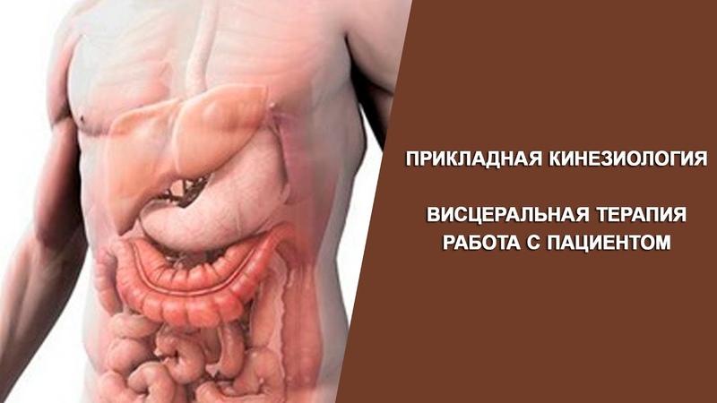 Прикладная кинезиология Висцеральная терапия Работа с брюшной полостью Крутов Г М