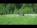 Поисковые способности лошадей