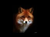 Для братика Foxy Play) От сестры Викуси)