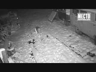 Сводка. Убил жену в Вахрушах. 07.11.2018