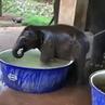 "🌟Rima Pendgieva (ПЫШКИ РУЛЯТ ) on Instagram: ""Боже..какая милота .аж зашкаливает 😍😍😍🐘🐘❤❤ goodmorningworld goodday слон слонёнок животныел"