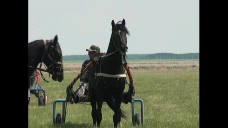 В Калачинском районе прошли конные скачки на приз Главы района.