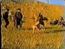 Аборигенные Собаки Дагестана Галбац Малыш