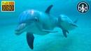 Песни Дельфинов под Шум Волн Океана Без Музыки 1 Час