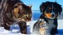 Кошка приютила щенка, который опустил лапки и перестал бороться, решив, что с него хватит...