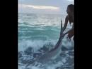 Смелая спасительница акул🦈👍 Девушка шла по пляжу и увидела акулу, которая была на пляже, она решила ей помочь, чтобы та не умерл