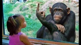 Funny Kids &amp Animals at the Zoo - Funny Zoo Animals - Funny Animals &amp Babies Video -Funny Zoo Videos