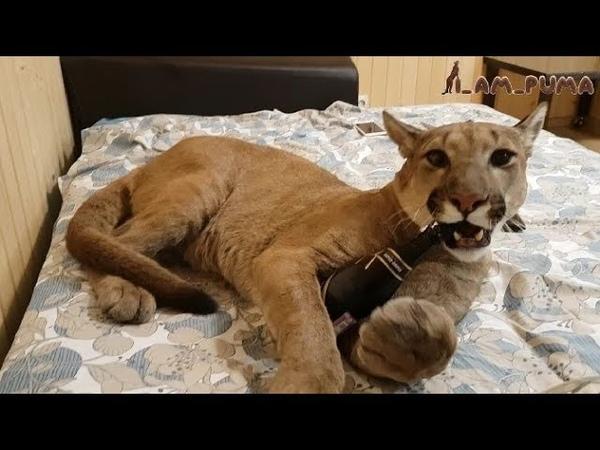 Кот алкоголик горе в семье Cat alcoholic