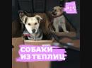 В Подмосковье нелегалы держали в теплицах собак , чтобы съесть их