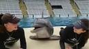 Дельфин и русалки...