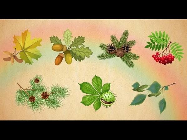 Обучающая игра для детей - Учим виды деревьев.