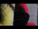 Кой кот Боня №1