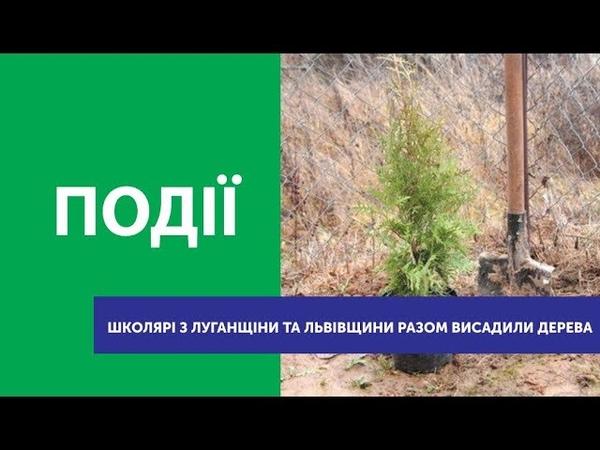Школярі з Луганщини та Львівщини разом висадили дерева