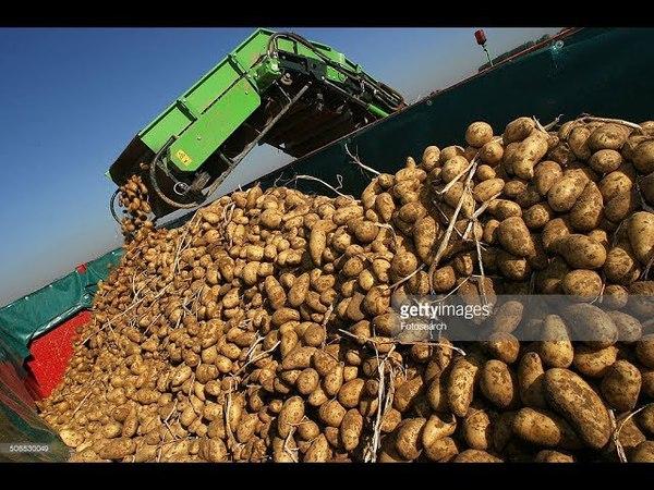 Potato Planting and Harvest - Grimme - Modern Agriculture Compilation