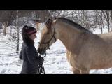 Знакомство лошади с кавессоном