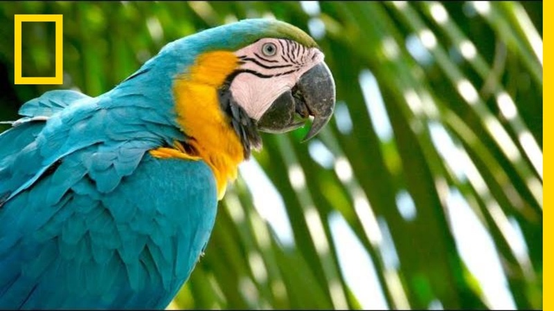 Why Are Wild Parrots Disappearing in Miami? | Short Film Showcase