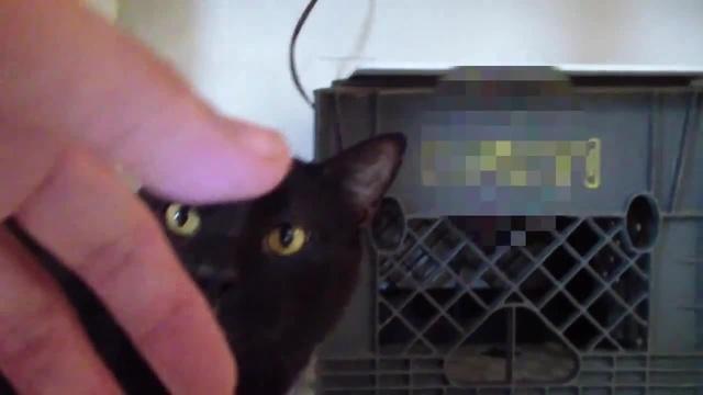 Talking Kitty Cat - Demon Cat