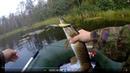 Тест силикона INTECH. Ловля щуки и окуня на воблеры на лесном пруду.