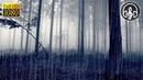 Ночной шум дождя в лесу 3 часа Дождь без грома и без музыки Звуки природы для сна