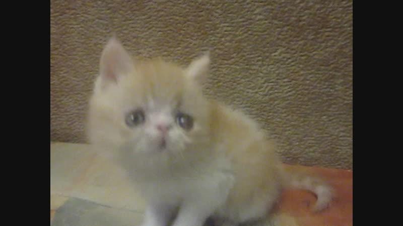 клуб цветоводов, мои котята 021