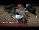 Закопанных щенков спасли