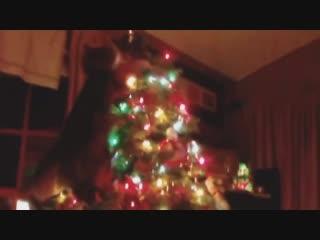 Смешные коты и кошки видео приколы!