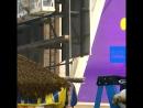 NC Тысячи пчел налетели на тележку с хот-догами в Нью-Йорке