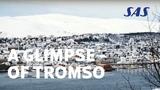 A Glimpse of Tromso Experience whale watching, Aurora Borealis and dog sledding SAS