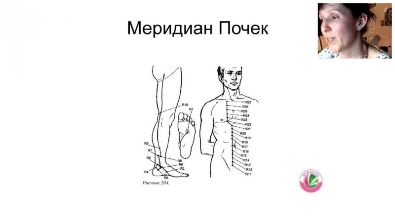Татьяна Сидушкина Здоровые почки Winalite глазами китайской медицины