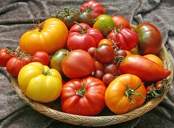РАЗНОЦВЕТНЫЕ ТОМАТЫ Многим людям нравится выращивать томаты разного цвета. В последнее время возрос спрос на томаты желтого и оранжевого цвета,они подходят для людей страдающих аллергией на