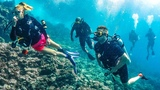 SCUBA DIVING WITH SHARKS!